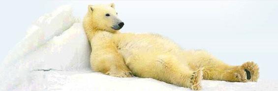 Urso deitado em geleira
