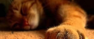 Gato, na moleza, dormindo