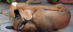 Cão e gato se mordendo