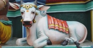 Vaca indiana ornamentada