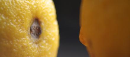Foto com close de duas laranjas