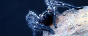 Aranha em uma superfície