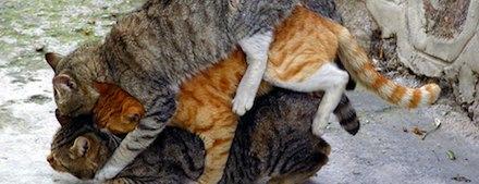 Três gatos durmindo de conchinha
